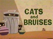 Cats and Bruises