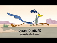 Multiply and Conquer Road Runner
