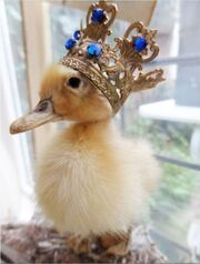 Duckcrown.jpg