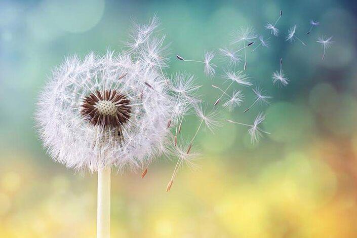 Dandelionnn.jpg