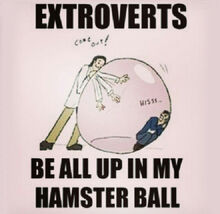 Cool-extroverts-bubble-hamster-ball-1.jpg