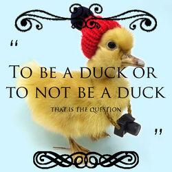Inspirational duck quote.jpg
