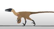 Velociraptor closeup