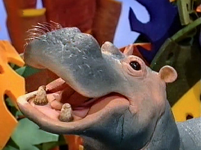 Episode 206: Hippopotamus & Cape Buffalo