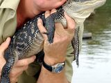 Steve Irwin (Lost Death footage, 2006)