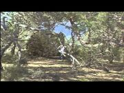 -HD-_Trilogy_of_Life-_Walking_with_Dinosaurs_Pilot_(2005)