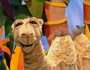Doreen the Camel