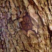 Tree mark.jpg
