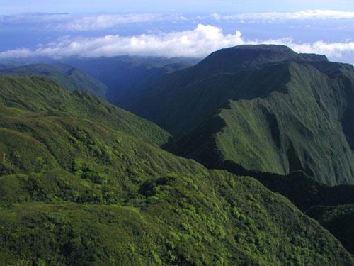 Chemin forestier de la Vallée Waihee