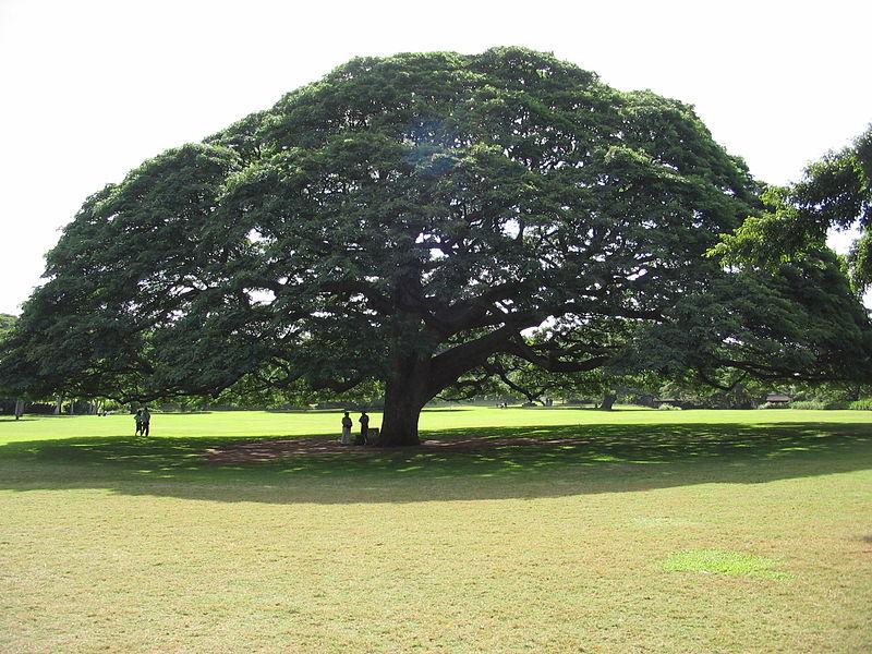 Jardins de Moanalua