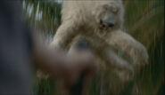 BearLaunchFreeze