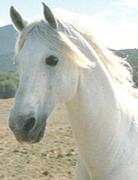 HorseThumb.png