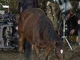 Brego (horse)