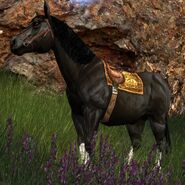 The Lord of the Rings Online - Bill the Pony