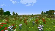Field of Celebrant Flowers