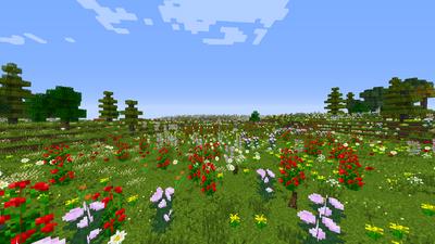 Field of Celebrant Flowers.png