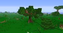 Riesenbaum.png