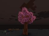 Giant Cherry Tree