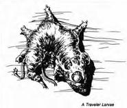 Larva de viajero (Ye Olde Book of Monstres)