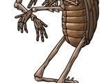 Coleopteran
