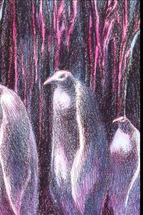 Pingüinos albinos