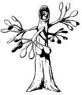 Xiclotlano (La Llamada de Cthulhu)