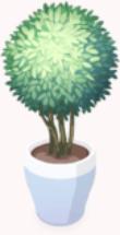 Happy Mood (Plant)