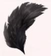 Black Swan's Crown