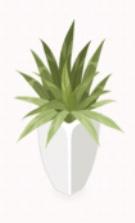 Green Plant in White Bottom