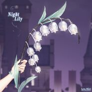 Night Lily close up 3