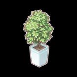 Furniture/Plants