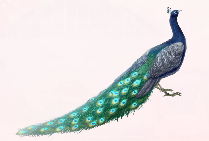 Blue Feather with chord