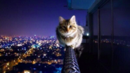 My fav animal's are cat's