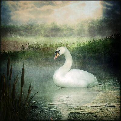 House Swan.jpg