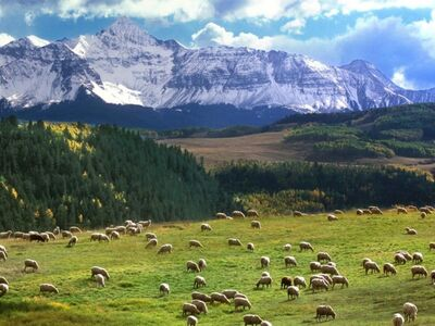 Herd Mountain Valley Wallpaper mp1zf.jpg