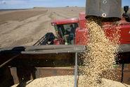 Soybean-harvesting-machines-at-work-1-1374331