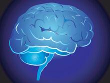 Brain-1634233.jpg