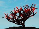 Fanon:Molten Wood