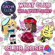 Club Rose
