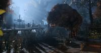Mutated-Bear-Exodus