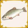 Pretty River Fish