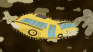 Bus Bacterium