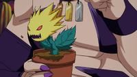 Sabnock Sabro's Plant