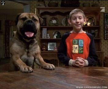 Dewey's Dog