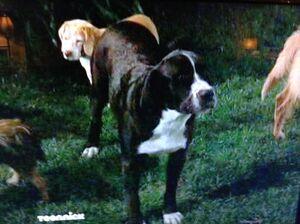 Lucky the Dog.jpg