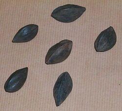 Seeds camerun.jpg