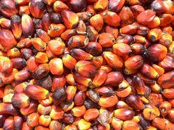 Palm nuts.jpg