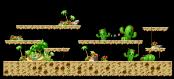 Cactus Desert 1