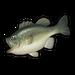 Largemouth Bass.png