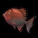 Crimson Piranha.png